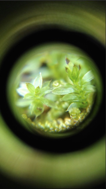 micro scope iPhone - 18