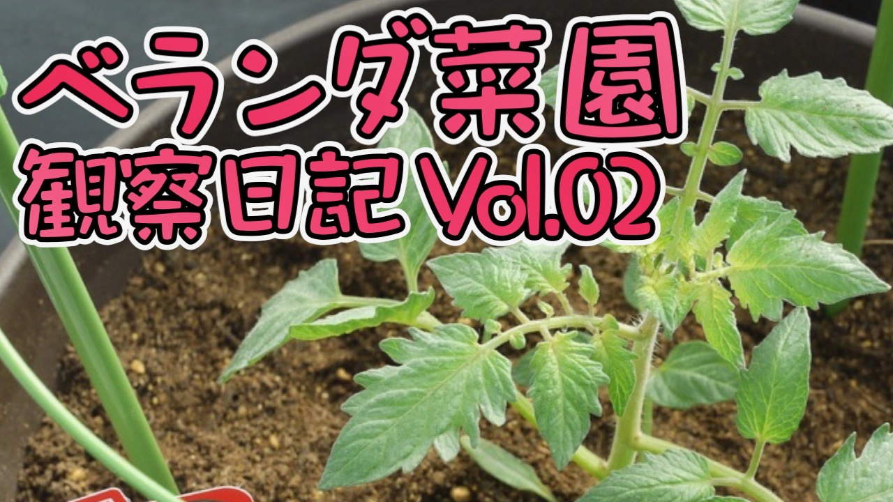Photo of Veranda Garden Diary # 2 I tried to eat harvestable cherry tomatoes and eggplants! | AppBank – iPhone, find the fun of your smartphone